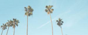 Los Angeles Palms Blue Sky